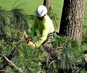 Tree Removal Services in Chicago